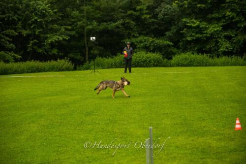 HSO Obedience 25.07.2021-24