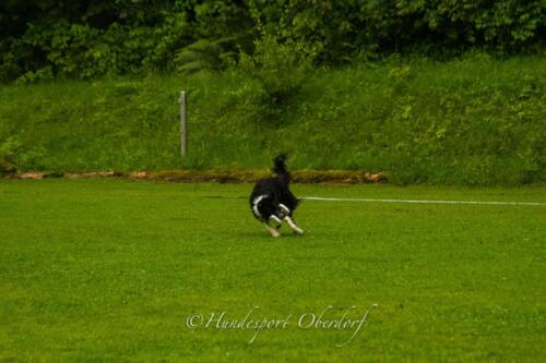 HSO Obedience 25.07.2021-50