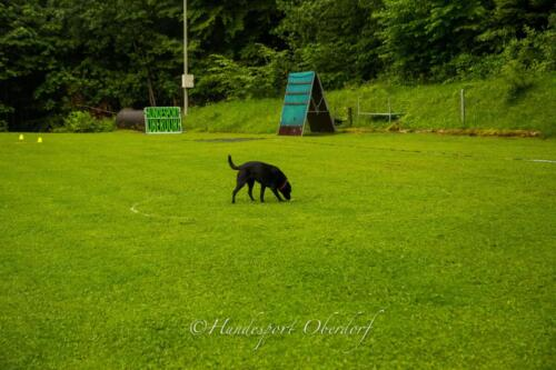 HSO Obedience 25.07.2021-53