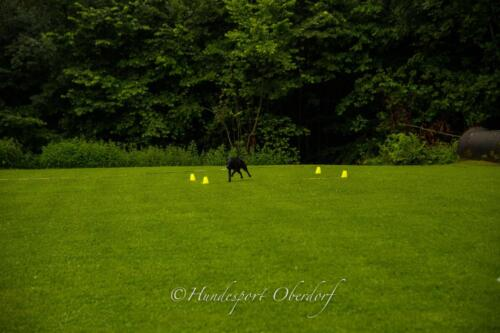 HSO Obedience 25.07.2021-54
