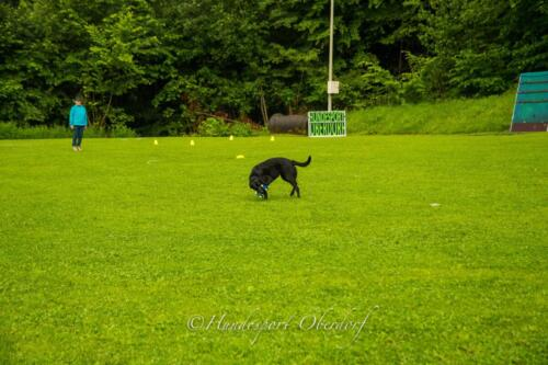 HSO Obedience 25.07.2021-56
