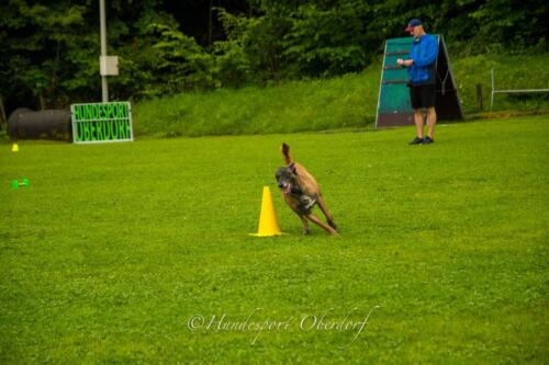 HSO Obedience 25.07.2021-62