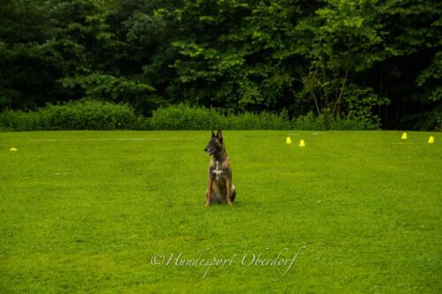 HSO Obedience 25.07.2021-64