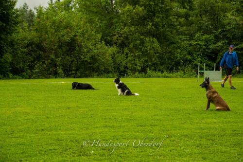HSO Obedience 25.07.2021-69