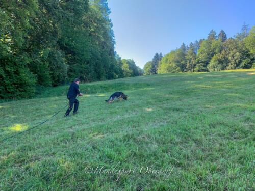 HSO Training 12.07.2020-2