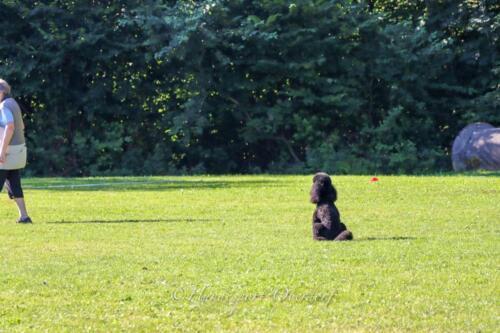 Obedience Beginners 09.08.2020-11
