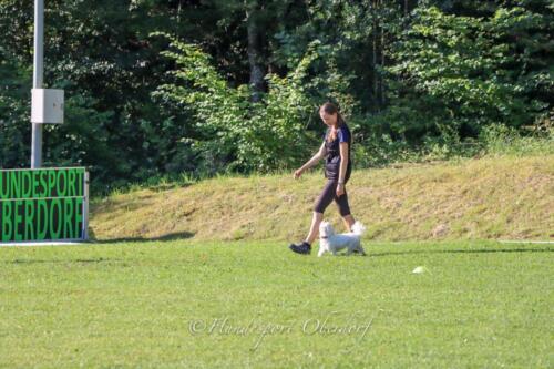 Obedience Beginners 09.08.2020-16