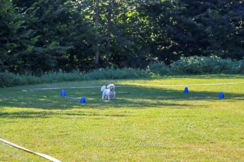 Obedience Beginners 09.08.2020-18