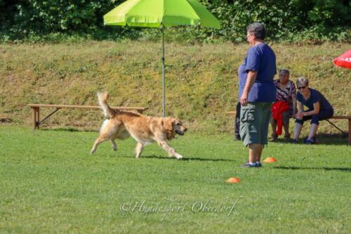 Obedience Beginners 09.08.2020-27