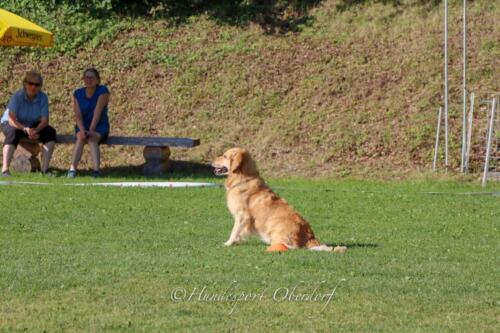 Obedience Beginners 09.08.2020-28