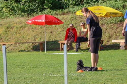 Obedience Beginners 09.08.2020-3