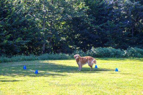 Obedience Beginners 09.08.2020-31