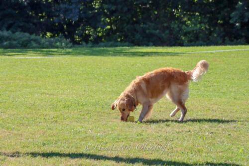 Obedience Beginners 09.08.2020-32