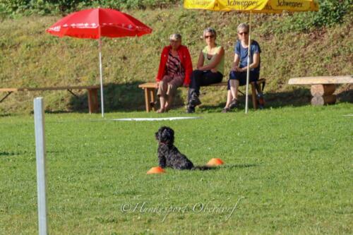 Obedience Beginners 09.08.2020-4