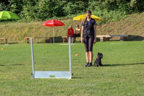 Obedience Beginners 09.08.2020-5