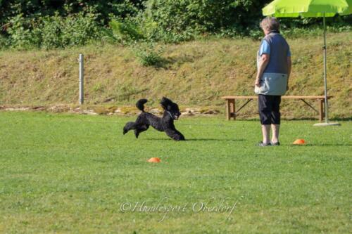 Obedience Beginners 09.08.2020-8