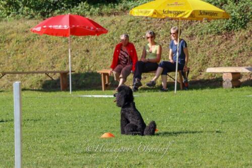 Obedience Beginners 09.08.2020-9