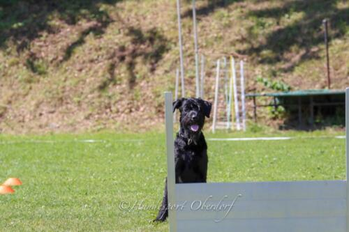 Obedience FCI1 09.08.2020-40