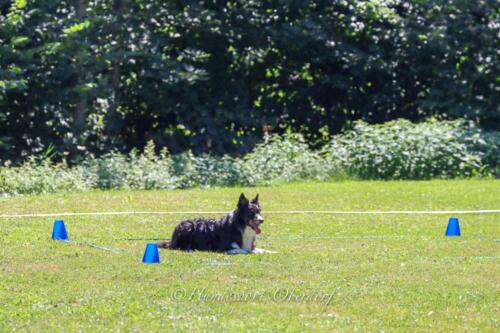 Obedience FCI2 09.08.2020-43